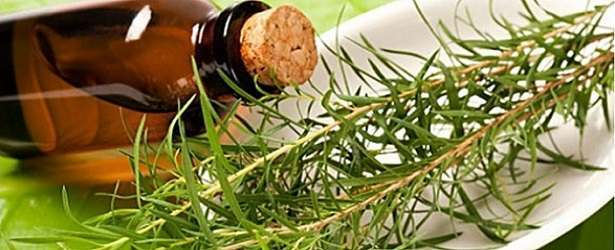 Treat Foot Fungus with Tea Tree Oil